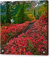 Mount Baker Sunrise Acrylic Print