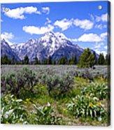 Mount Moran Wildflowers Acrylic Print by Brian Harig