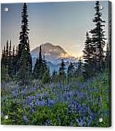 Mount Rainer Flower Fields Acrylic Print