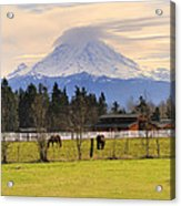 Mount Rainier And Grazing Horses Acrylic Print