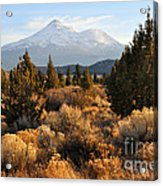 Mount Shasta In The Fall  Acrylic Print by Gary Whitton