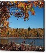 Mountain Ash In Autumn Acrylic Print