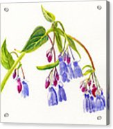 Mountain Bluebells Acrylic Print by Sharon Freeman