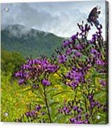 Mountain Butterfly  Acrylic Print