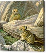 Mountain Haymakers - Pika Acrylic Print