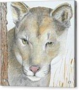 Mountain Hunter Acrylic Print