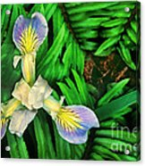 Mountain Iris And Ferns Acrylic Print