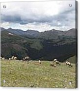 Mountain Landscape With Bighorn Sheep Acrylic Print