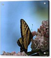 Mountain Larual Butterfly Acrylic Print
