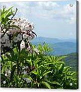Mountain Laurel Acrylic Print