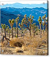 Mountain Layer Landscape From Quail Springs In Joshua Tree Np-ca- Acrylic Print