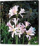 Mountain Lillies Acrylic Print