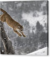 Mountain Lion - Silent Escape Acrylic Print by Wildlife Fine Art