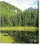 Mountain Marsh Acrylic Print