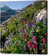 Mountain Meadow Acrylic Print by Cole Black