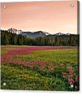 Mountain Meadow Color Acrylic Print