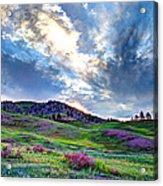 Mountain Meadow Of Flowers Acrylic Print