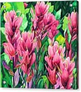 Mountain Meadows' Paintbrush Acrylic Print