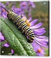 Mountain Monarch 2 Acrylic Print