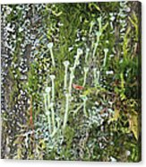 Mountain Moss Lichens And Fungi Acrylic Print