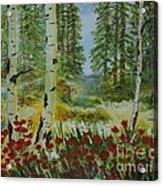 Mountain Poppies Acrylic Print
