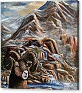 Mountain Ram Acrylic Print