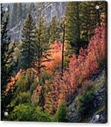 Mountain Side Colors Acrylic Print