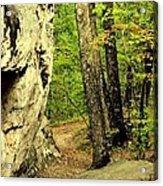 Mountain Trail Acrylic Print