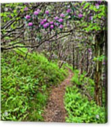 Mountain Trail With Catawba Rhododendron Acrylic Print