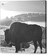 Mountain Wildlife Acrylic Print