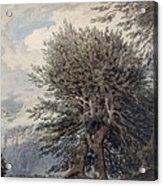 Mountainous Landscape With Beech Trees Acrylic Print