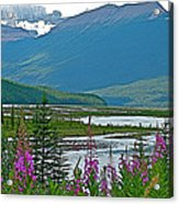 Mountains And Fireweed Along North Sascatchewan River Along Icefield Parkway-ab Acrylic Print