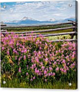Mountains And Wildflowers Acrylic Print