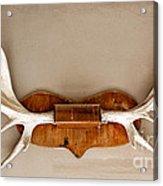 Mounted Elk Antlers Acrylic Print