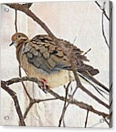 Mourning Dove - Sing No Sad Song For Me #2 Acrylic Print
