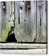 Mouse Hole Acrylic Print by Olivier Le Queinec