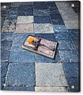 Mouse Trap With Cheese. Acrylic Print