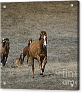 Moving On Out Acrylic Print
