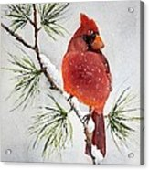 Mr Cardinal Acrylic Print by Bobbi Price