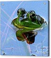 Mr. Frog Acrylic Print