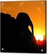 Mr Gobbles At Sunset Acrylic Print