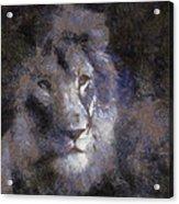 Mr Lion Photo Art 02 Acrylic Print