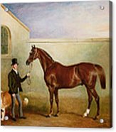Mr Meakin Holding Sir Robert Peels Chestnut Hunter With His Dogs Hector And Jem Acrylic Print