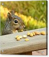 Mr. Squirrel Goes To Lunch Acrylic Print