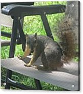 Mr. Squirrel Relaxing Acrylic Print