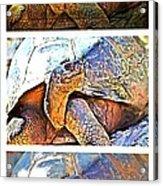 Mr. Tortoise Vertical Triptych Acrylic Print
