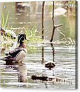 Mr. Wood Duck And Friends Acrylic Print