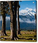 Mt Cook Through Trees Acrylic Print
