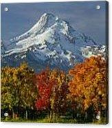 1m5117-mt. Hood In Autumn Acrylic Print