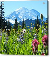 Mt. Rainier Wildflowers Acrylic Print